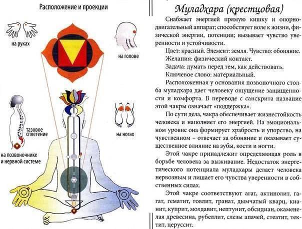 Свадхистана чакра (вторая): за что отвечает, где находится и как ее развить