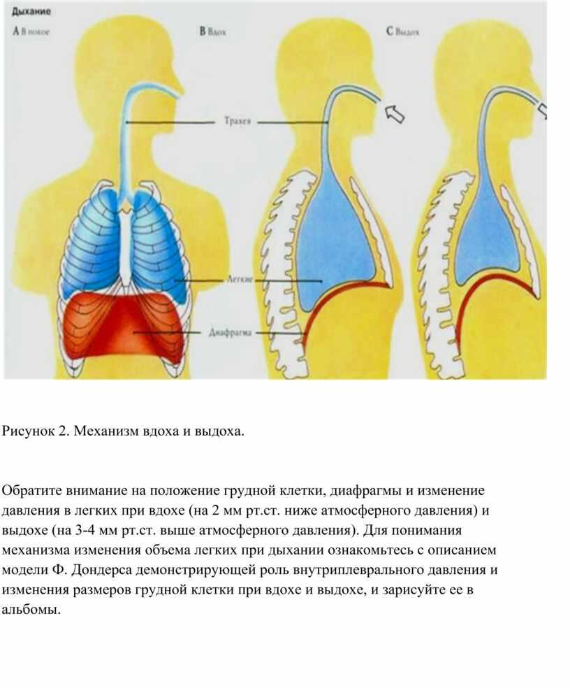 Как улучшить качество жизни за счет дыхательных упражнений