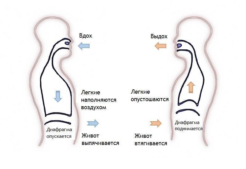 Практика дыхания животом, ее преимущества и недостатки