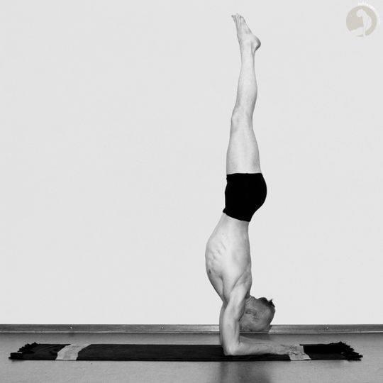 Асана маюрасана. поза павлина в йоге