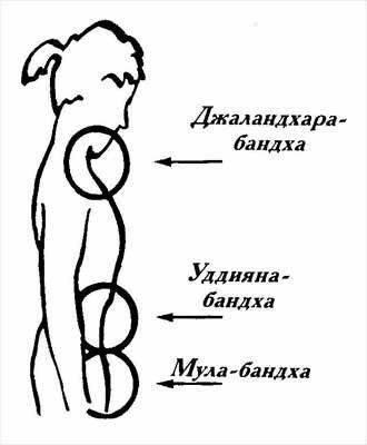 Уддияна бандха: техника выполнения для начинающих