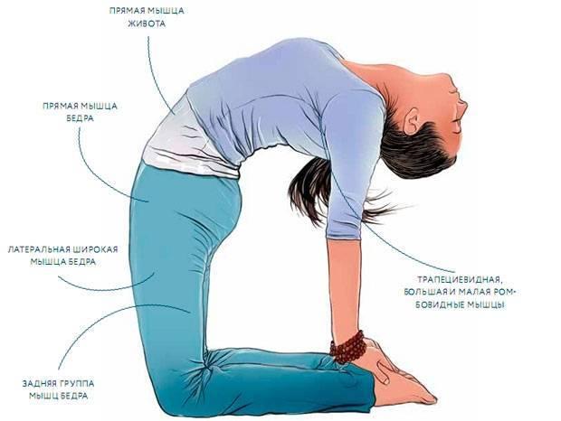 Поза верблюда в йоге: польза и техника выполнения