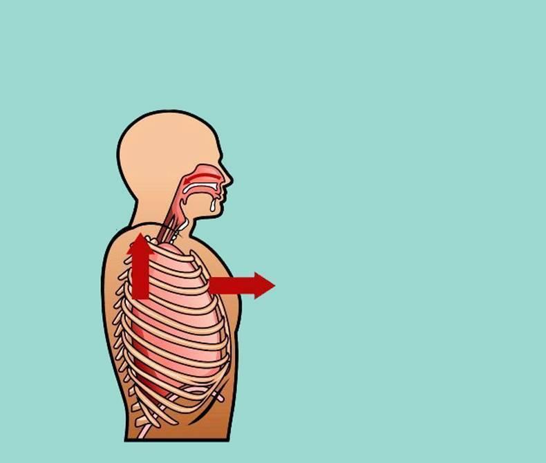 Дыхательная гимнастика: методы и упражнения
