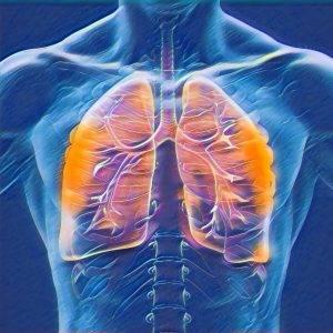 Как правильно дышать диафрагмой?   оздоровительная школа система дыхания