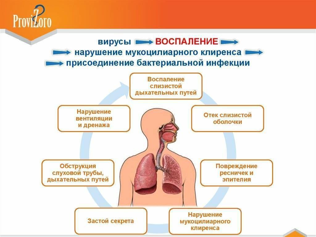 Как улучшить отхождение мокроты – упражнения, дренаж, чтобы откашлять мокроту - сибирский медицинский портал