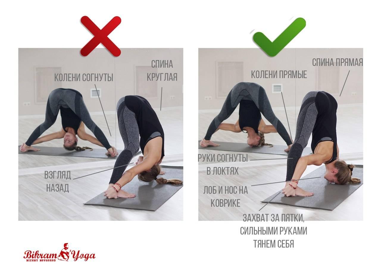 Йога айенгара для начинающих — 10 первых асан