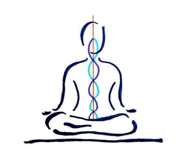 Пранаяма для начинающих в трех этапах: анулома вилома