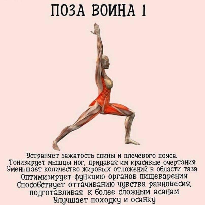 Восстановление коленных суставов  | slavyoga восстановление коленых суставов практикой йоги — slavyoga
