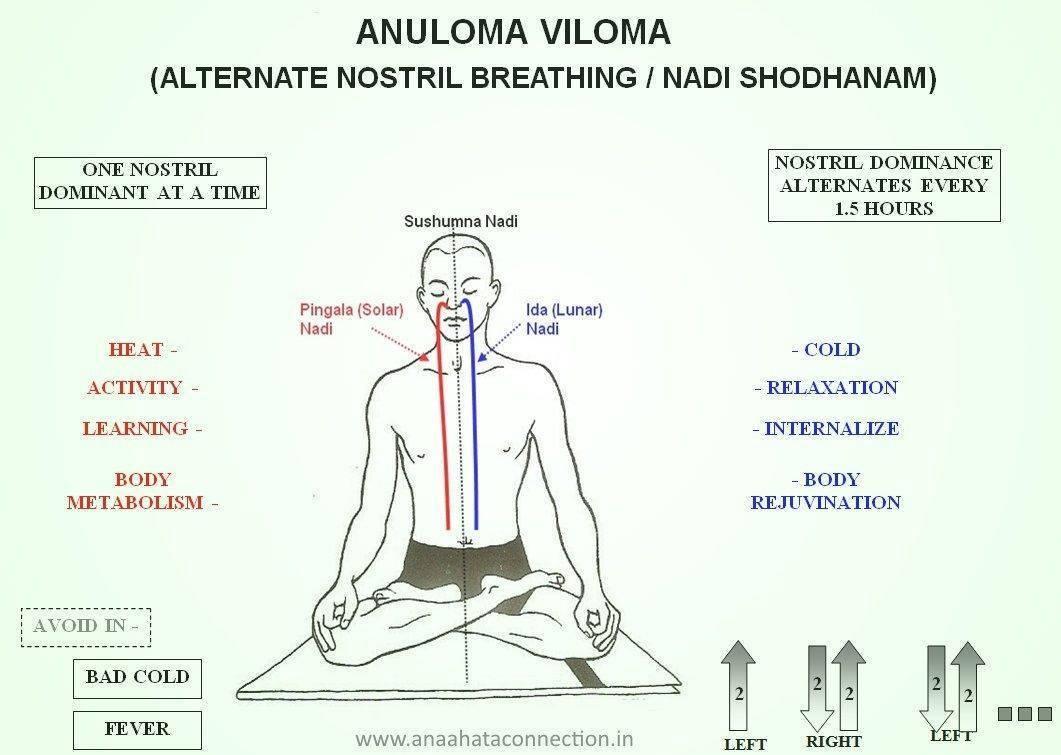 Правильное дыхание в йоге для начинающих: виды и циклы