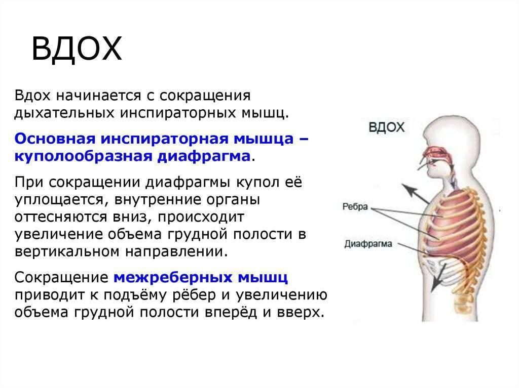 Как правильно дышать для улучшения здоровья - medical insider