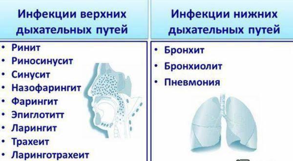 ➤ как лечить заболевания дыхательных путей и легких