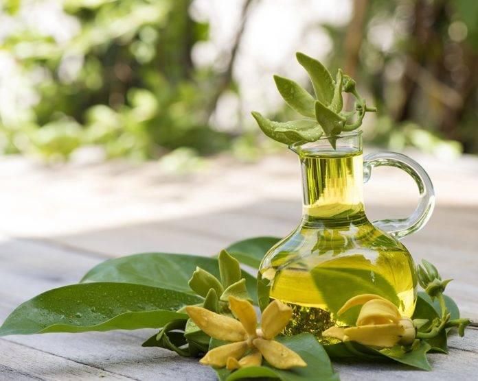 Эфирное масло иланг-иланг: свойства, применение, противопоказания
