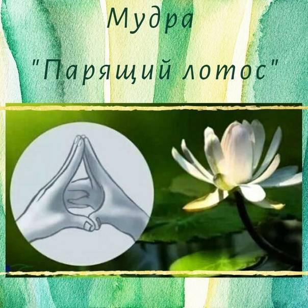 Мудра лотоса. мудры для исполнения желаний, привлечения денег, здоровья и любви