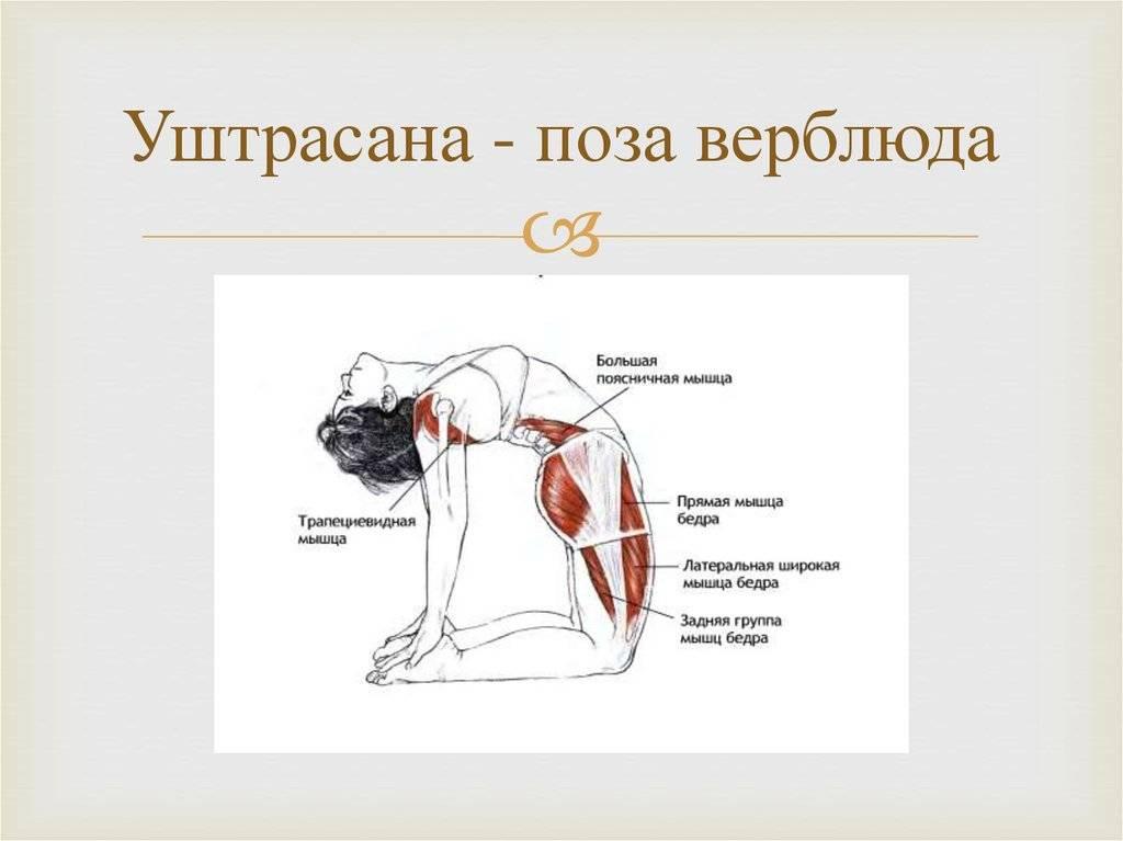 Уштрасана — поза верблюда в йоге