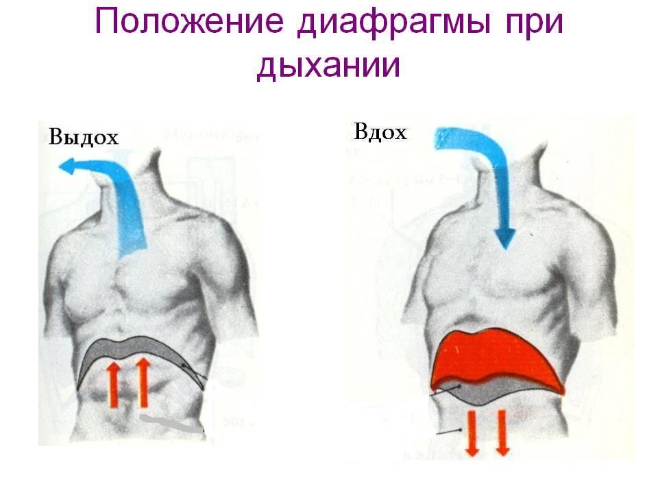 Дыхательная гимнастика для начинающих: 4 упражнения с видео :: здоровье :: рбк стиль