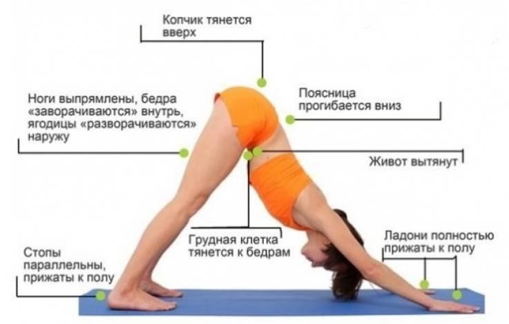 Собака мордой вниз (адхо мукха шванасана): техника выполнения этой позы в йоге, а также польза асаны и ее противопоказания (с видео и фото)
